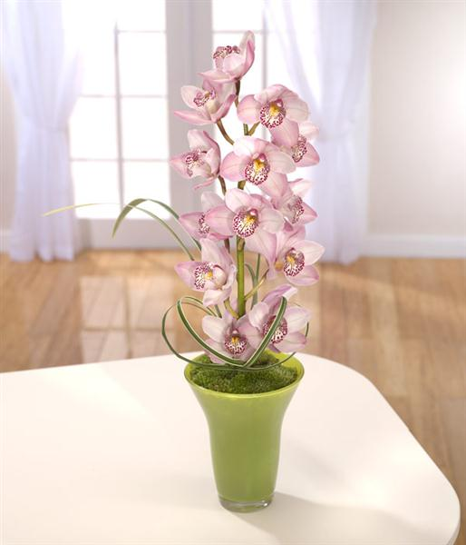 Striking Cymbidium Vase